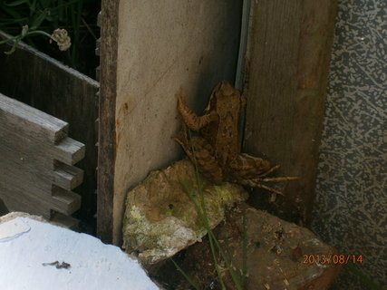 FOTKA - navštěva -žabička,