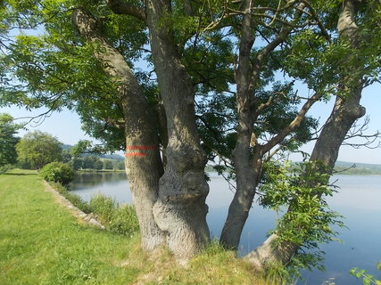 FOTKA - Z břehu rybníka+