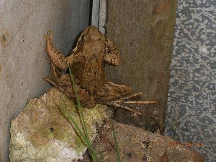 FOTKA - žabička na návštěvě u nás