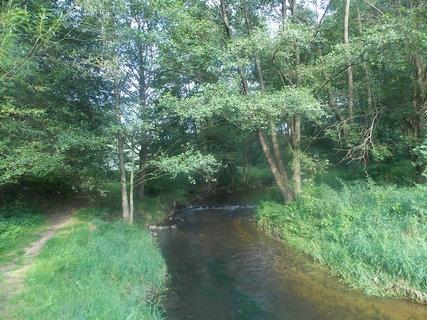 FOTKA - Protékající potok lesem
