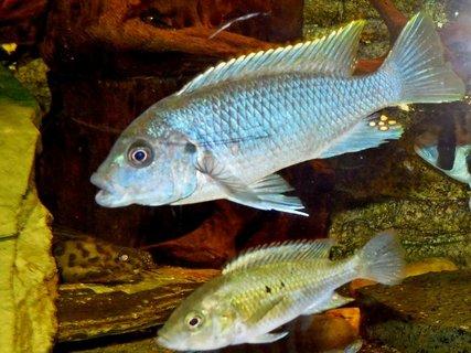 FOTKA - naše rybičky8