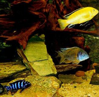 FOTKA - naše rybičky9
