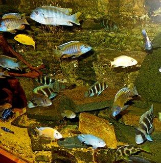FOTKA - naše rybičky10