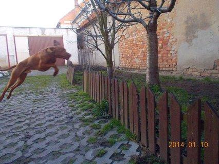 FOTKA - ...ela hop
