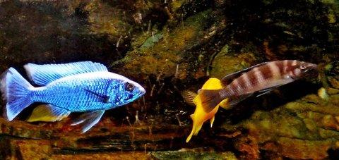 FOTKA - naše rybičky11
