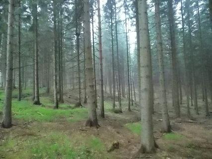 FOTKA - Lednový les