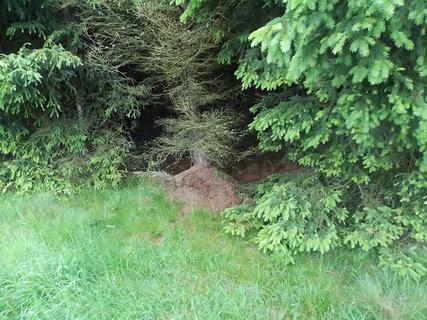 FOTKA - Vysoké mraveniště