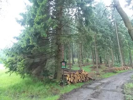 FOTKA - na svoz pripravene drevo