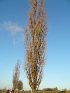 FOTKA - Stromy v zimě 1