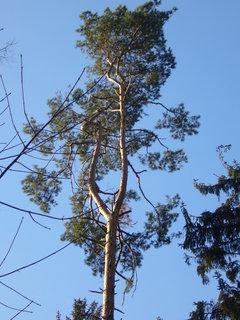 FOTKA - Stromy v zimě 3
