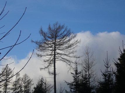 FOTKA - Stromy v zimě 2