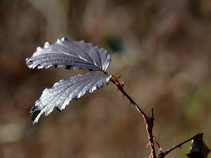 FOTKA - Leden v lese