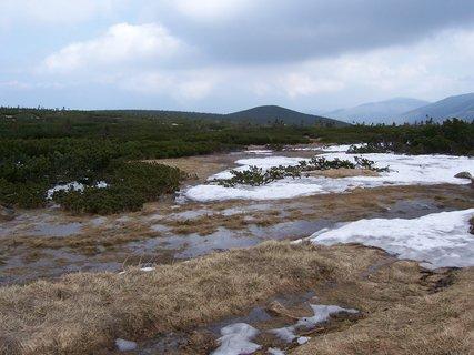 FOTKA - Krkonoše - rašeliniště