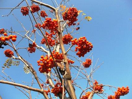 FOTKA - foto z podzimu .