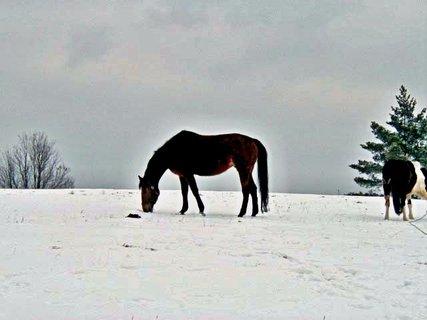 FOTKA - Sněhová pastva.....