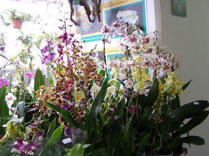 FOTKA - Orchideje připravené k prodeji