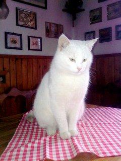 FOTKA - Na stůl nesmím