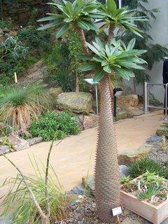 FOTKA - Fata morgana - kaktus v sukuletní části