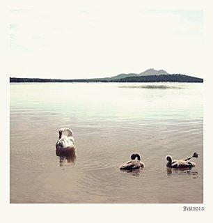 FOTKA - na jezeře v pozad Bezděz