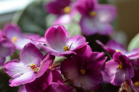 FOTKA - Trošku veselých barev v pošmourném dnu