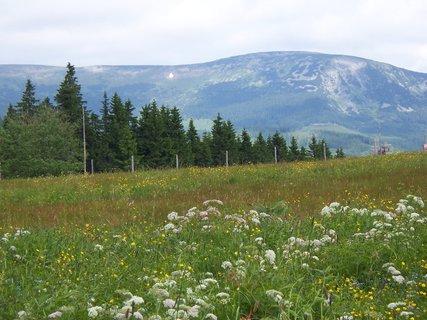 FOTKA - louka a Studniční hora