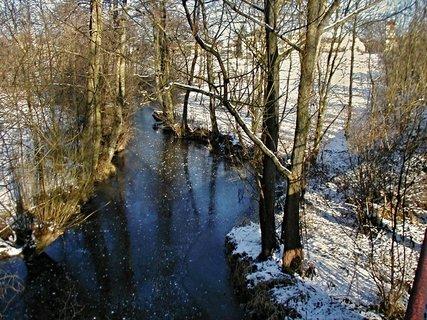 FOTKA - Dračice v zimě