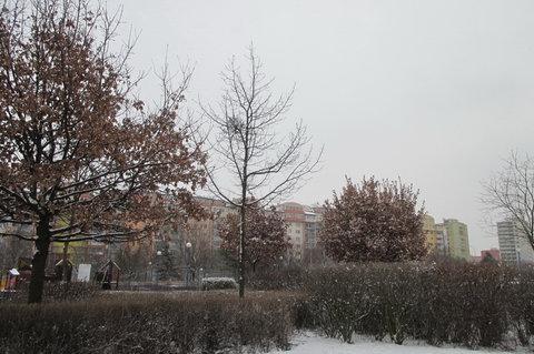 FOTKA - V parku na sídlišti