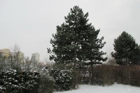 FOTKA - V parku ticho