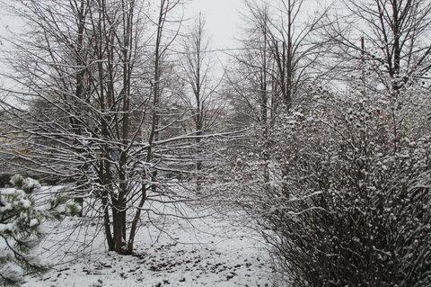 FOTKA - Ozdobené stromečky