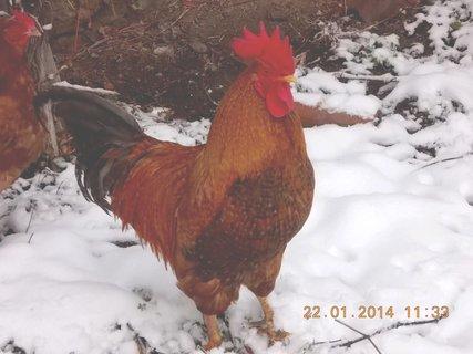 FOTKA - nemám rád sníh