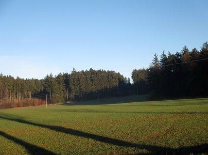 FOTKA - U lesa 2