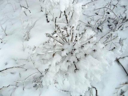 FOTKA - jako u Mrazíka.