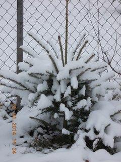 FOTKA - ani nejsem pro sníh vidět