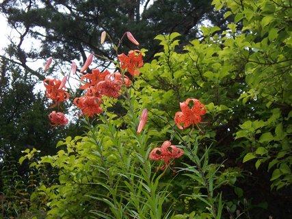 FOTKA - květena v Průhonickém parku