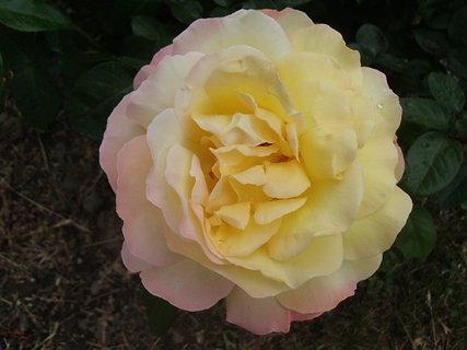 FOTKA - ružička pre dnešný deň