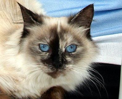 FOTKA - Modré moje jsou....