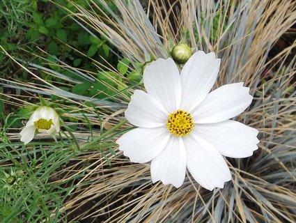 FOTKA - bílý květ ..