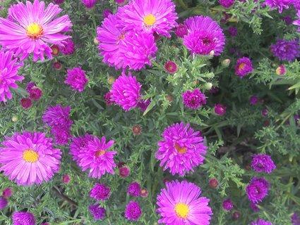 FOTKA - září na zahradách