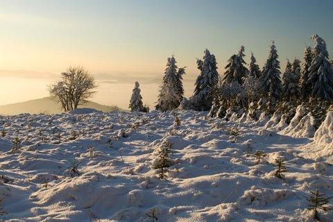 FOTKA - Zimní ráno...