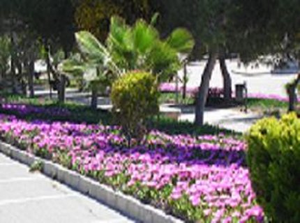 FOTKA - plné parky i stráně kvetoucích sukulentů