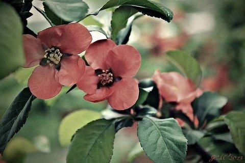 FOTKA - květ ..
