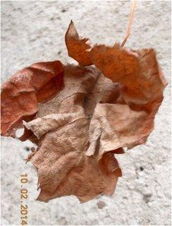 FOTKA - vinný list vydržel i sníh