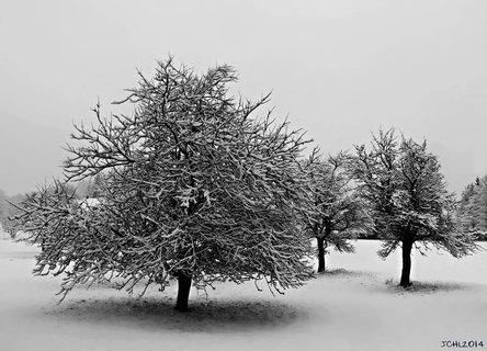 FOTKA - zimní .