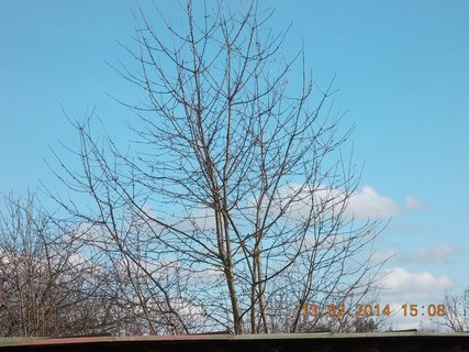 FOTKA - jako jarní nebe - 5