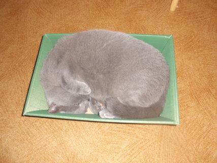 FOTKA - Mazlík a krabice od výhry