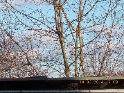 FOTKA - mraky za stromy-2