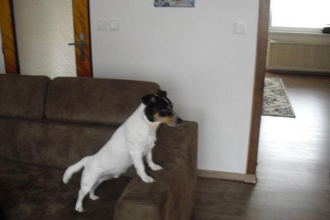 FOTKA - Ben sleduje televizi