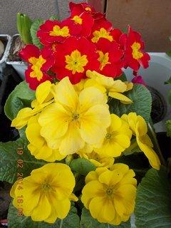 FOTKA - před květinářstvím-2