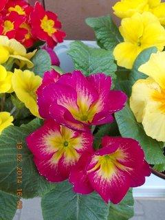 FOTKA - před květinářstvím-3