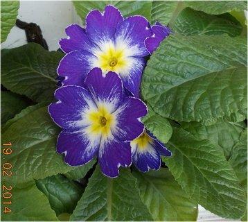 FOTKA - před květinářstvím-5